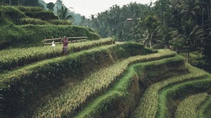 Bali | Film